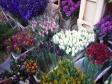イギリスの花市場の写真素材01