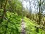 イギリスの雑木林の写真素材01