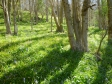 イギリスの雑木林の写真素材02