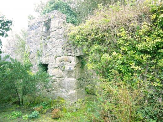 イギリスの石垣とツタの写真素材02