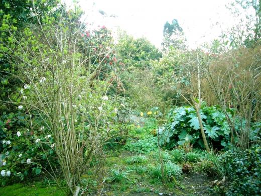 イギリスの庭の写真素材04