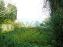 イギリスの庭の写真素材05