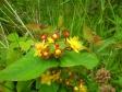 イギリスの野草花の写真素材