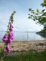 スコットランドの湖と花の写真素材
