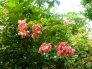 ピンク色の花の写真素材