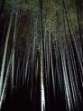 夜の竹林の写真素材