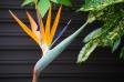 極楽鳥花の写真素材