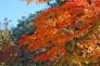 もみじ・紅葉の写真素材15