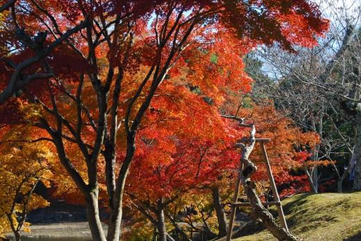 もみじ・紅葉の写真素材16