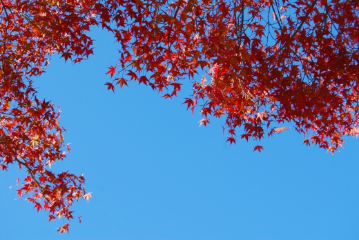 青空と紅葉の写真素材