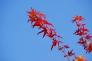 青空と紅葉の写真素材02