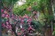 紅梅の写真素材