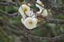 白梅の写真素材02