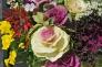 葉牡丹の写真素材03