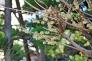 蝋梅の花の写真素材