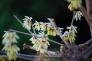 蝋梅の花の写真素材03
