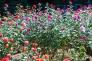 バラの写真素材06