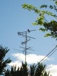 アンテナと鳥の写真素材