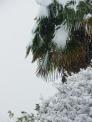 シュロと雪の写真素材