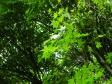 もみじ・緑の写真素材03