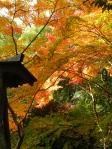 もみじ・紅葉の写真素材19