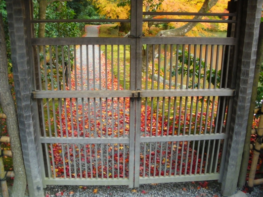 もみじ・紅葉と門の写真素材