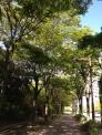 公園の散歩道の写真素材03