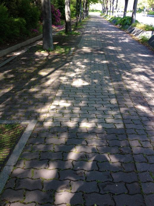 公園の散歩道の写真素材04