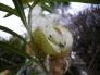 綿の実の写真素材02