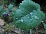 葉と水滴の写真素材02