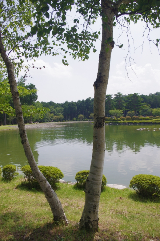 白樺と湖の写真素材
