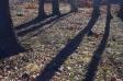 木の影の写真素材