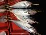 鮮魚の写真素材01
