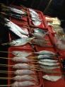 鮮魚の写真素材02